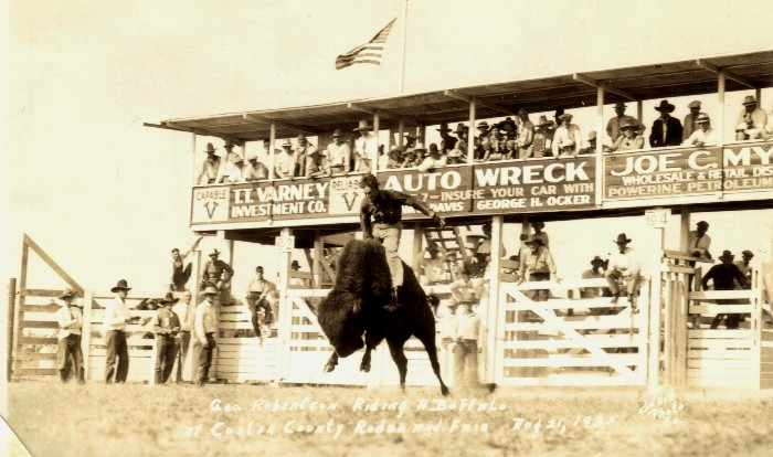 George Robertson Riding a Buffalo at Custer County Fair and Rodeo, August 21,1935 (courtesy of Troy Walz)
