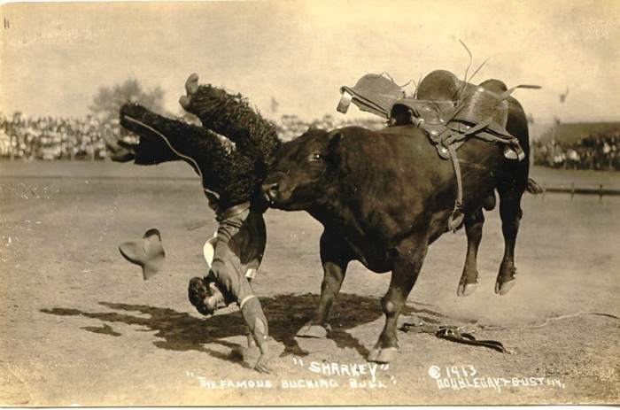 Sharkey, The Famous Bucking Bull, 1913